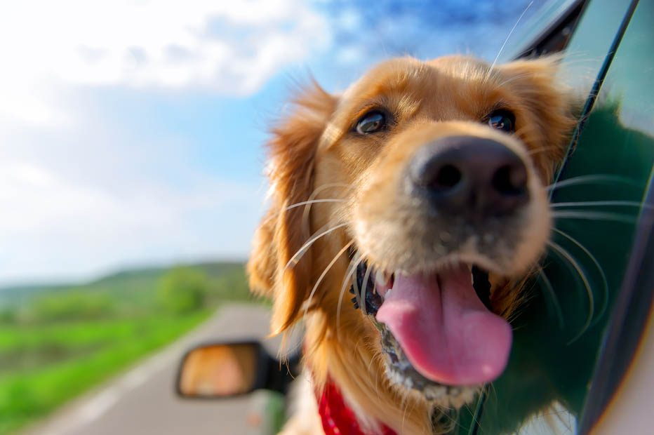 Wonderful Places to Take Your Dogs When Traveling