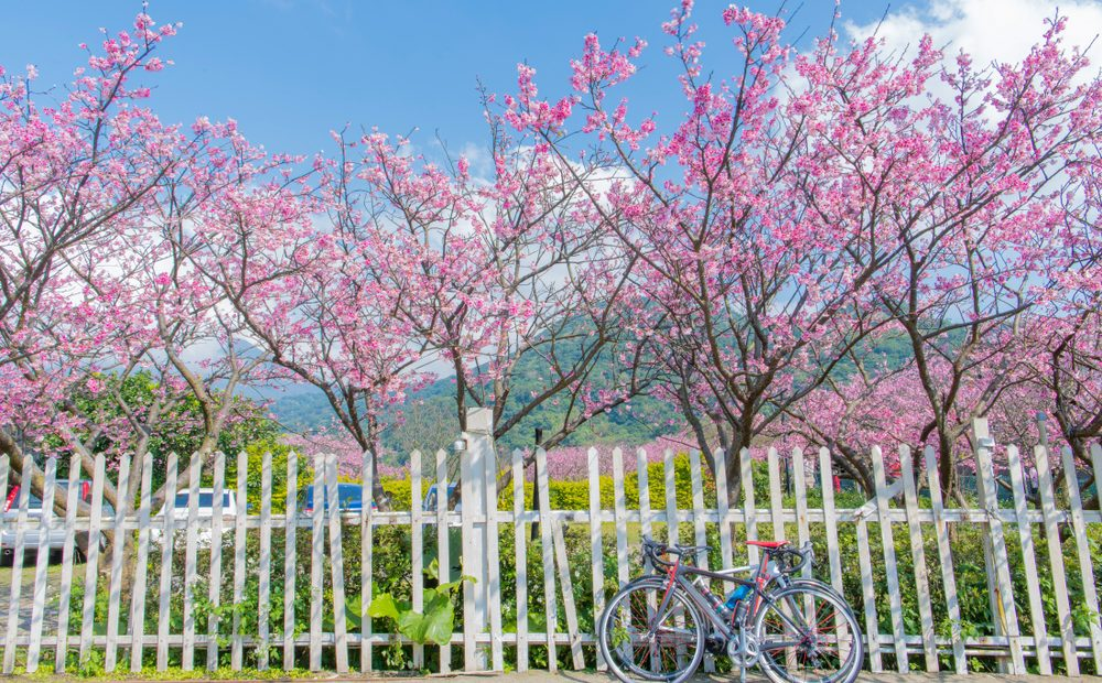 7 Wonderful Places to See Cherry Blossoms Around the World