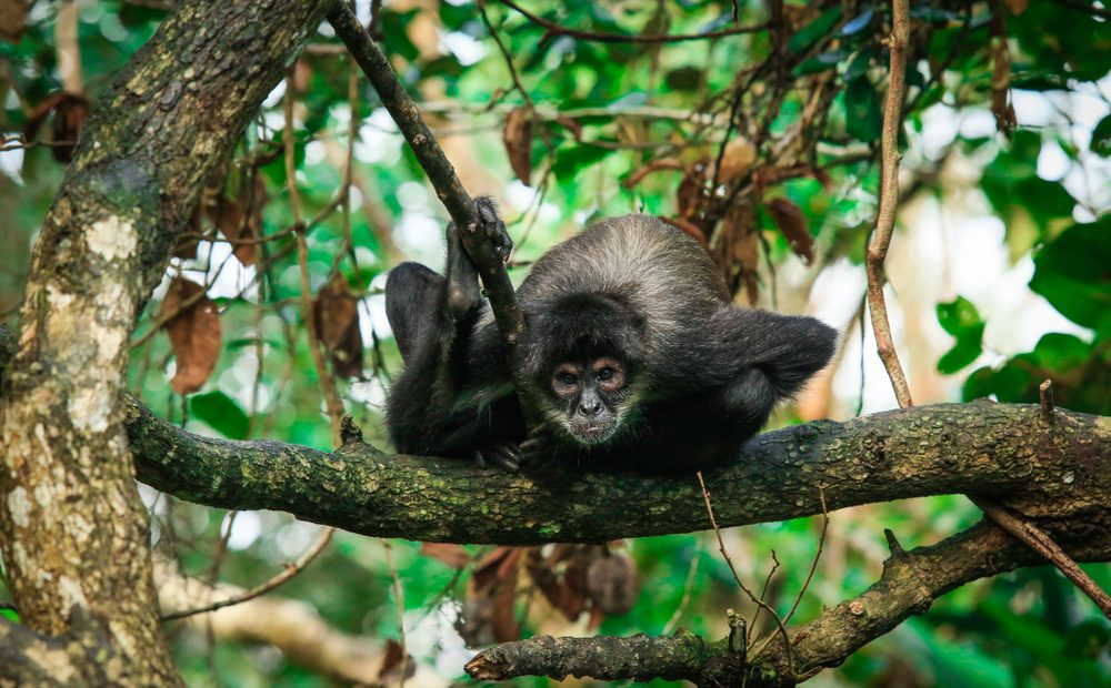 The 5 Best Places to See Monkeys Around the World