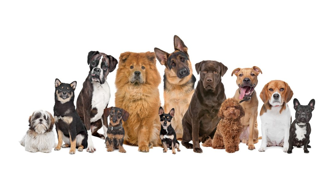 The Most Popular Dog Breeds Around the World