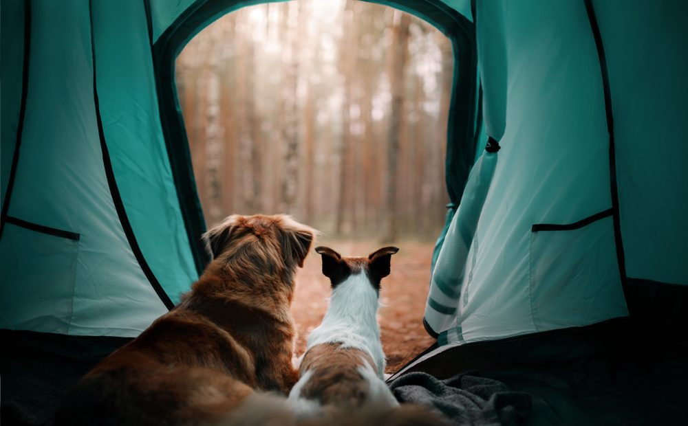 Camping is the Current Travel Trend in the USA