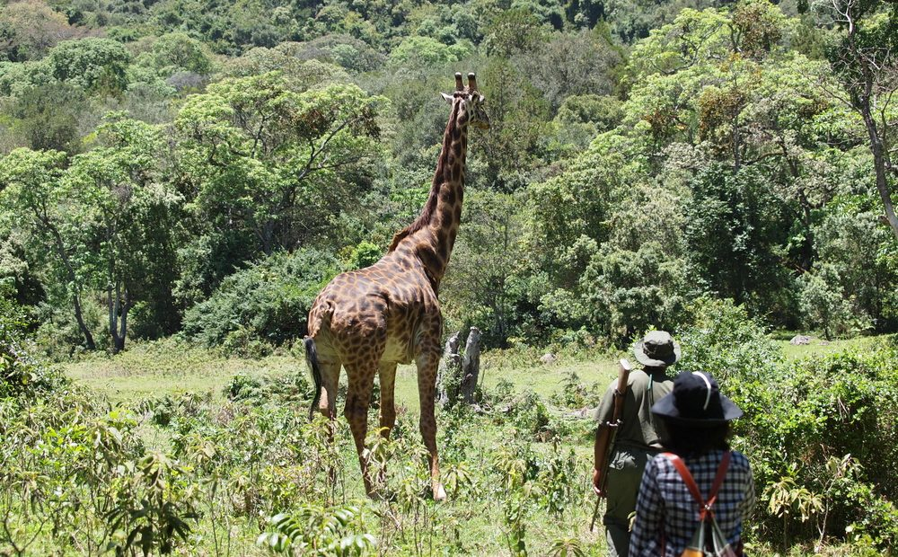 Do Walking Safaris Provide a More Intimate Experience With Wildlife?