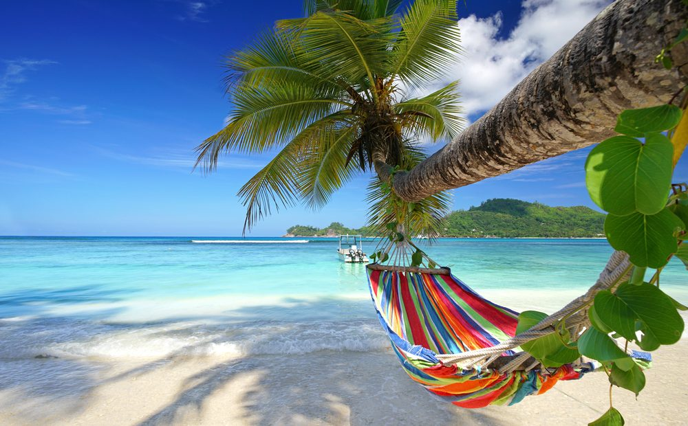 a hammock dangles from a palm tree